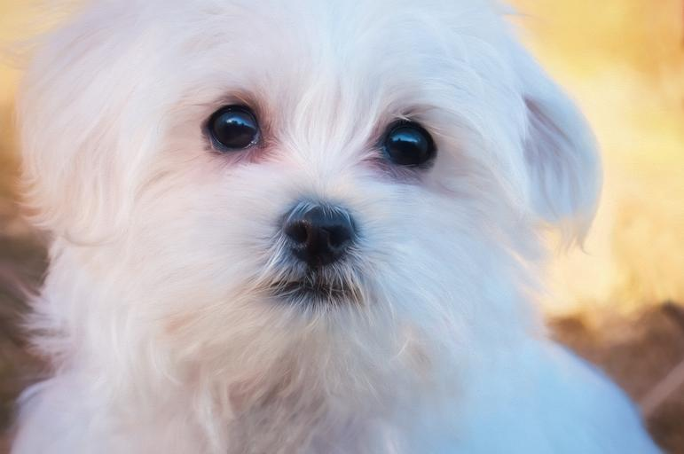 How to Pick out the Right Pet Portrait Artist